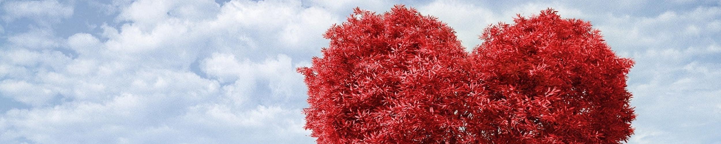 RSL Boomt: gratis pakketje liefdesbomen