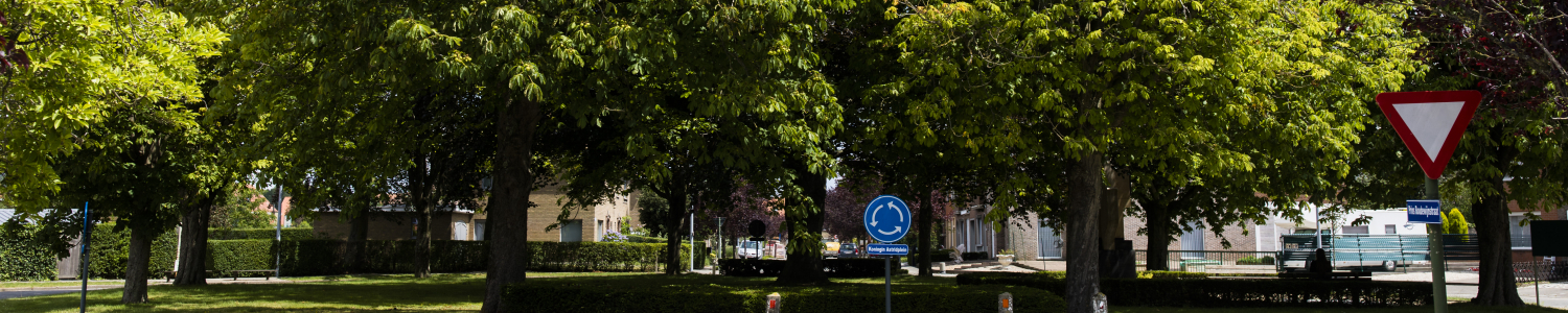 Bomen op rondpunt - Foto Maarten Devoldere