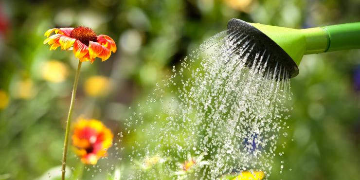 Bewust omgaan met water in de tuin